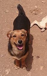 hund klein griechiscch